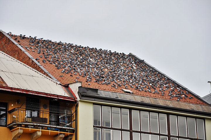 A2B Pest Control are able to install spikes to deter birds from roofs in Stoke On Trent.