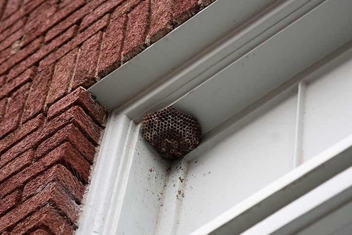 We provide a wasp nest removal service for domestic and commercial properties in Stoke On Trent.